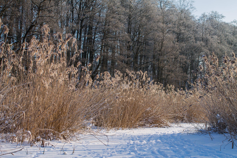 Зимний пейзаж Калининградская область