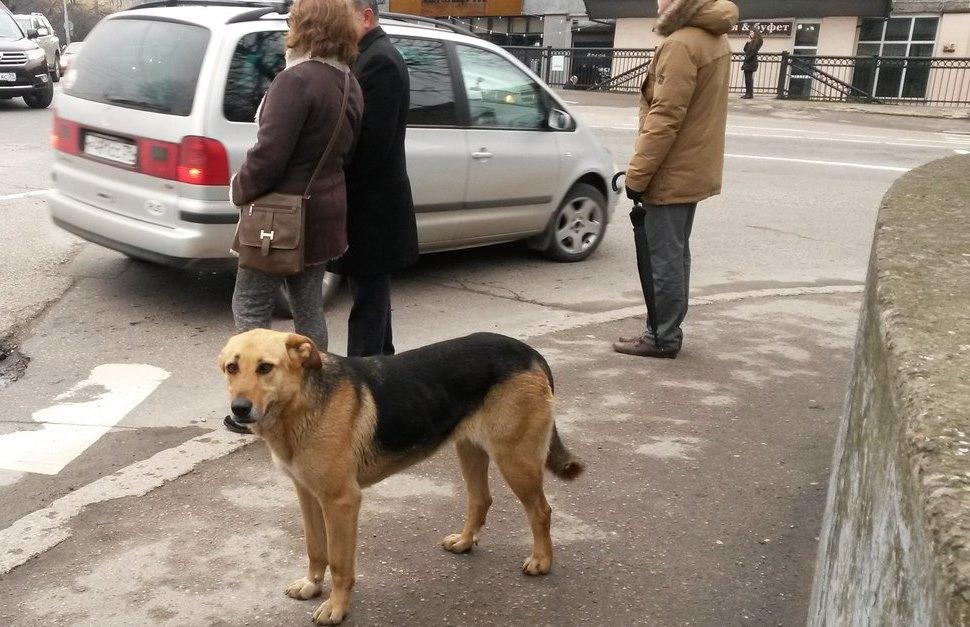 собака бездомная
