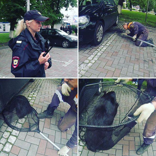 Вцентре Калининграда МЧС и милиция ловили бобра