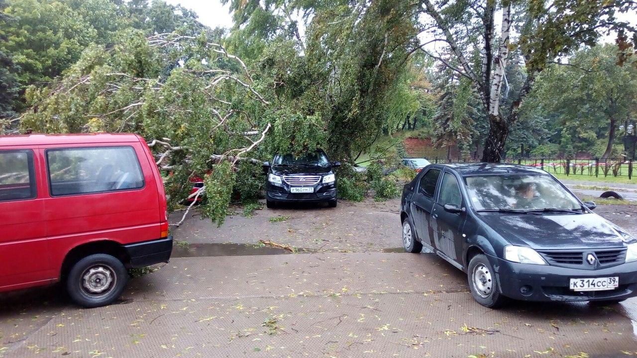 Штормовой ветер вКалининграде повалил 16 деревьев