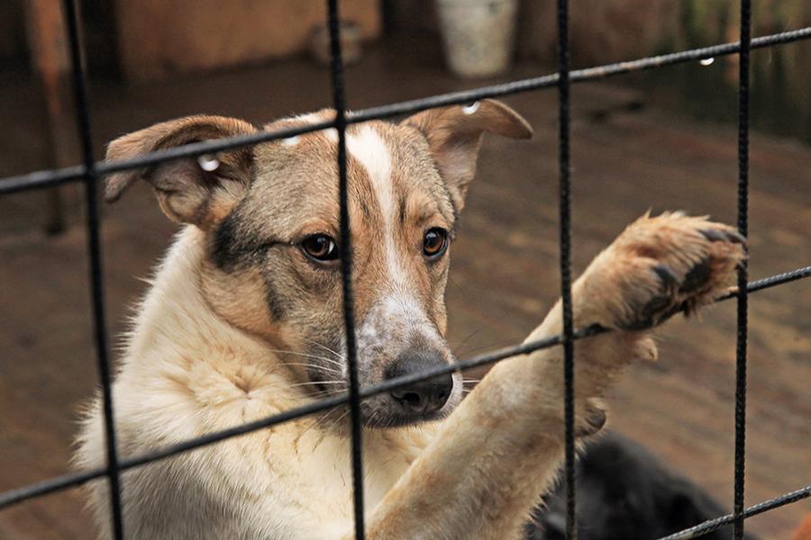 Алиханов в приюте для собак