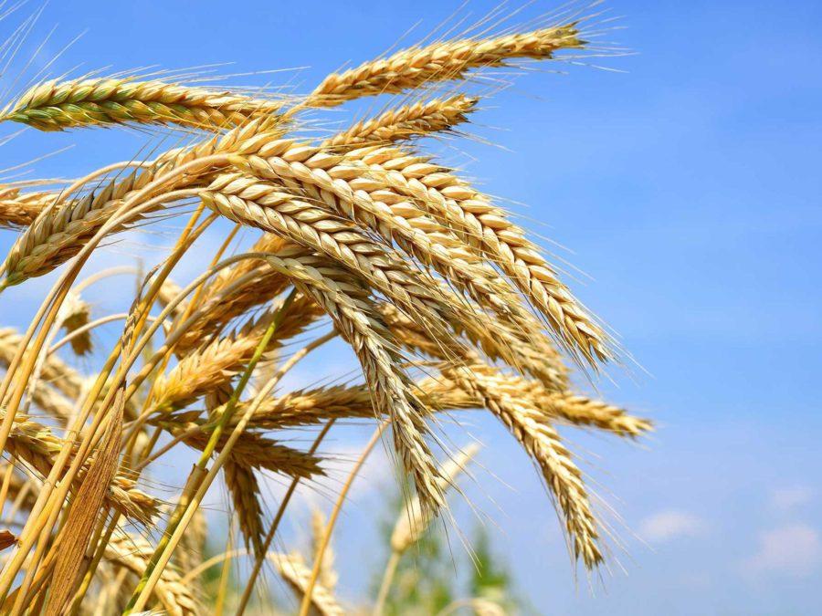Украина продолжает наращивать объемы экспорта зерновых