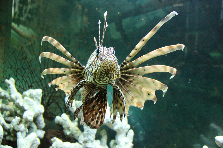 рыба зоопарк